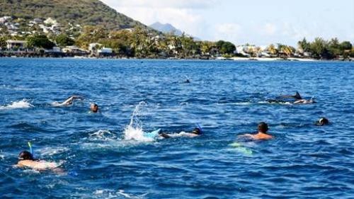 Du khách có thể bơi cùng cá heo tại Ấn Độ Dương