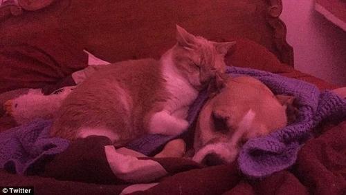 Chó hoảng sợ vì pháo hoa, mèo âu yếm an ủi gây sốt ở Mỹ