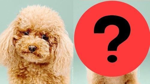 Đây sẽ là hình ảnh biến hóa của thú cưng nhà bạn chỉ sau 30 phút ...