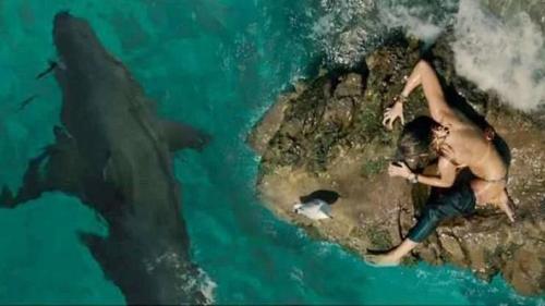 The Shallows - Cá mập cũng đừng hòng đùa với 'phu nhân của Deadpool'