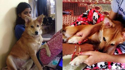 Có chồng đại gia, nhưng cô gái Ấn Độ vẫn huỷ hôn vì anh ta không thích nuôi chó