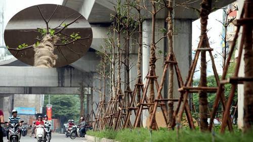 Đây là lý do Hà Nội trồng cây sau khi chặt hàng loạt cây dưới gầm đường sắt Cát Linh - Hà Đông