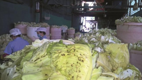 Kinh hoàng hình ảnh cải bắc thảo được chế biến từ rau thải