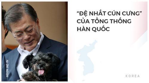 Chú chó được giải cứu trở thành 'Đệ nhất cún cưng' của Tổng thống Hàn Quốc