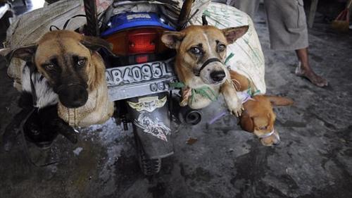 Rợn người cảnh giết chó tàn bạo trong lò mổ ở Indonesia