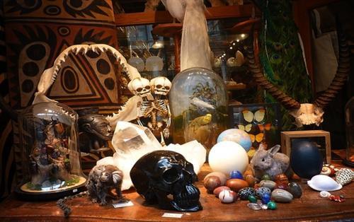 Cửa hàng chuyên bán đồ 'độc': Răng khủng long, bê hai đầu, xương dương vật gấu trúc