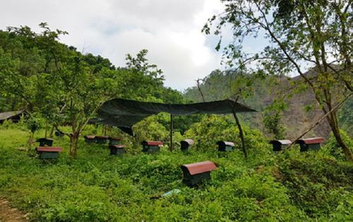 Chàng trai Phú Thọ bỏ bằng cử nhân sư phạm lên rừng nuôi ong