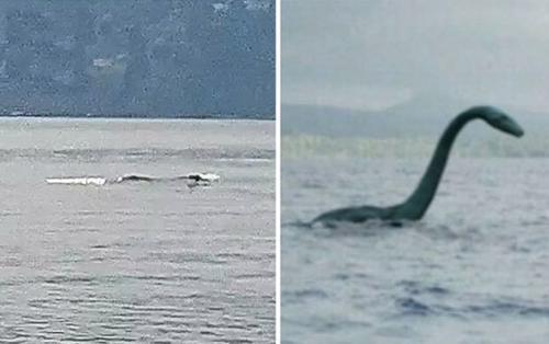 Phát hiện sinh vật biển dài hơn 12 m giống khủng long