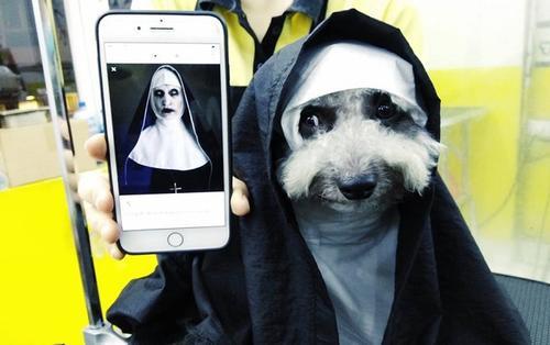 Hậu Halloween, bức ảnh chú chó hóa thân thành ma sơ Valak vẫn khiến dân tình phát cuồng