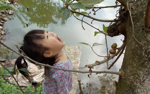 Bức ảnh đáng yêu nhất MXH: Tin lời chị gái cô bé há hốc miệng chờ sung rụng theo nghĩa đen và cái kết khiến dân mạng phì cười