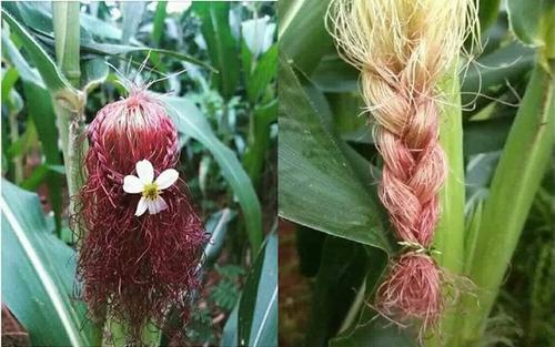 Những bức ảnh chứng minh khi bạn muốn thành nhà tạo mẫu tóc, nhưng bố mẹ lại bắt ở nhà trồng ngô khiến dân mạng cười ngất