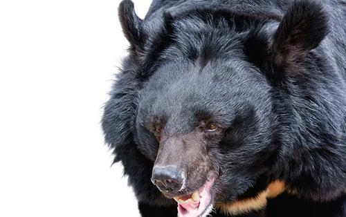Giây phút gấu vồ, lôi nhân viên vườn thú qua hàng rào dây sắt rồi cắn