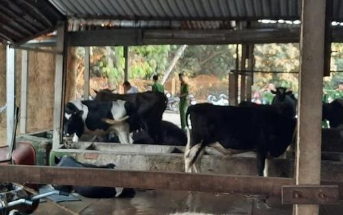 Vụ xả súng ở sòng bạc Củ Chi: Chủ con bò bị Tuấn 'khỉ' bắn chết đòi bồi thường 40 triệu