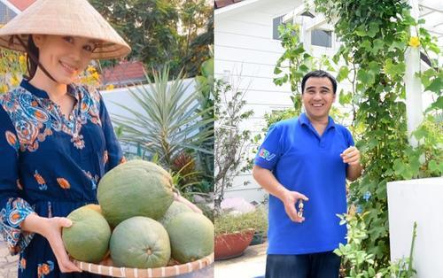 Ở nhà phòng dịch COVID-19, gia đình MC Quyền Linh rủ nhau thu hoạch vườn cây trĩu quả trong căn biệt thự tiền tỷ