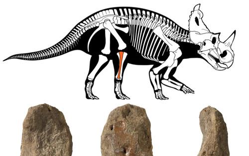 Phát hiện khủng long bị ung thư