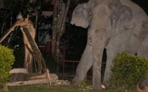 Chú voi bị mèo con rượt chạy 'tóe khói' khi đột nhập vào nhà dân tìm đồ ăn