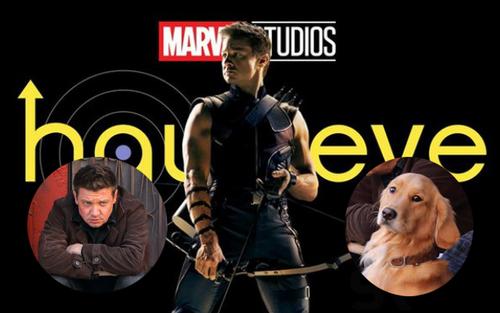 Kẻ chiếm spotlight nhất series 'Hawkeye' không phải nhân vật chính mà là chú chó