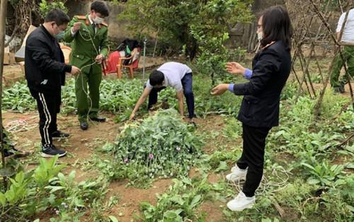 Thu giữ gần 3.000 cây anh túc và cần sa tại nhà người đàn ông ở Bắc Giang