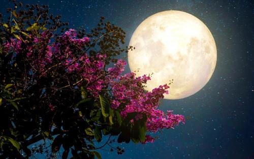 Mưa sao băng, siêu Trăng Hồng và loạt hiện tượng thiên văn kỳ thú sẽ xuất hiện tại Việt Nam tháng 4