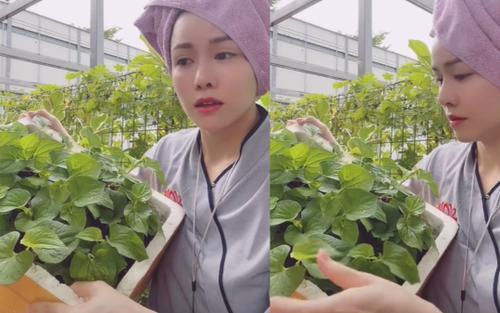 Bắt trend MXH, Nhật Kim Anh quay clip bán rau nhưng giá sản phẩm 'tiền tỷ' khiến dân tình tranh cãi