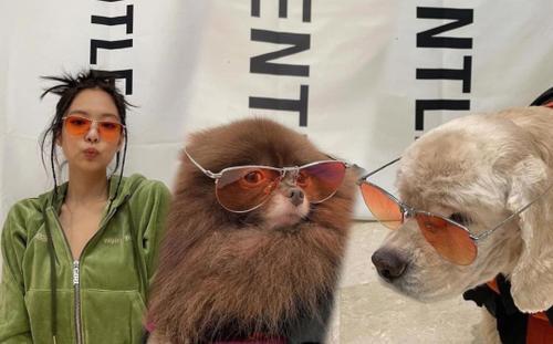 Jennie Black Pink cùng chó cưng đeo kính mát xịn sò chụp bộ ảnh thời trang