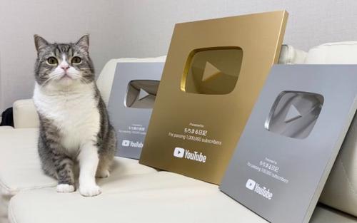 Chú mèo rinh nút Vàng YouTube, được kỷ lục Guinness ghi nhận