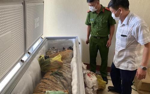 Hà Tĩnh: Trữ 'chúa sơn lâm' trong nhà để nhận 9 triệu tiền công