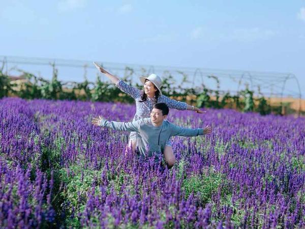 Những cặp đôi nào trót thích phong cách lãng mạn thì không thể nào bổ qua khung cảnh thật Tây của cánh đồng hoa oải hương