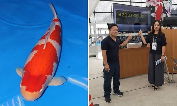 Nữ chủ nhân của con cá chép Koi đắt nhất thế giới là người Đài Loan (Trung Quốc). Ảnh: Sakai Koi Farm