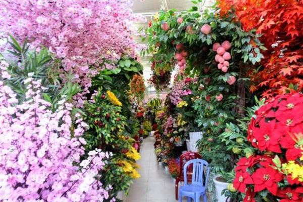 Ngoài những loại hoa được ưa chuộng cho ngày tết, các loại cây kết trái giả như xoài, mãng cầu, đào tiên,… cũng được khách tìm mua.