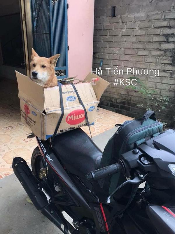Chó được để vào hộp an toàn.