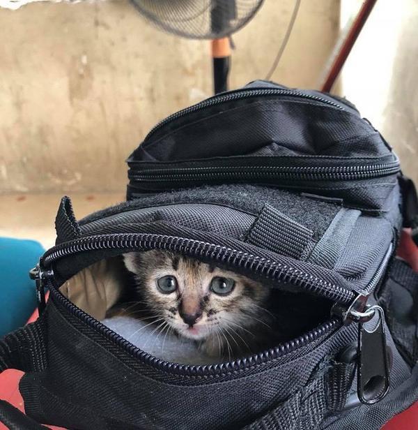 Những chú mèo được nhét vào balo để đưa về quê.