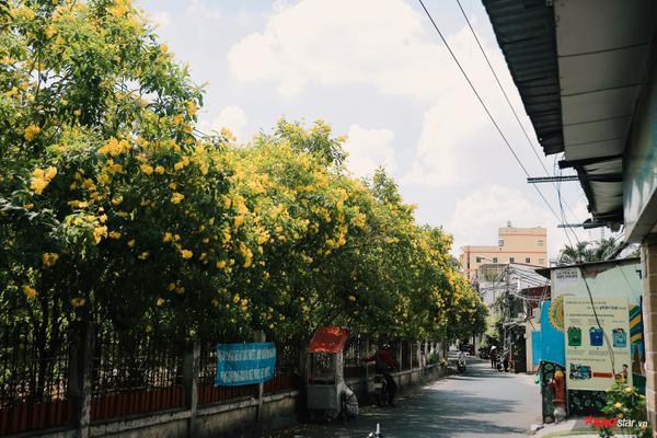 Bóng cây vàng trở thành một niềm thân thuộc của mọi người.