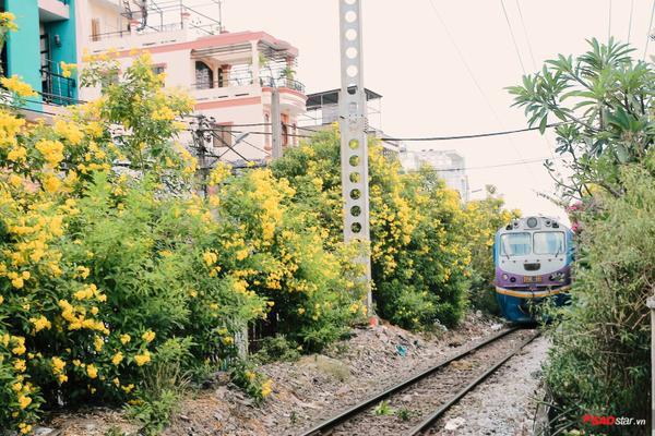 Những mùa chuông vàng rợp cả con đường tàu hoả.