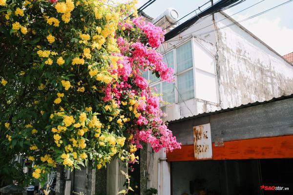 Hoa chen cùng hoa giấy bung toả giữa nắng.