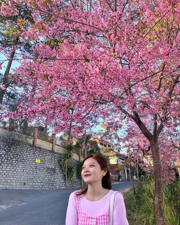 Chẳng cần phải xuất ngoại sang Hàn Quốc, tự có một mùa hoa giữa lòng thành phố Đà Lạt như thế rồi! Ảnh: @chloepham79_1