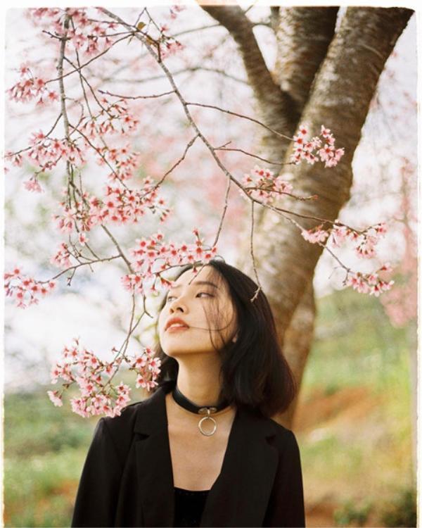 Trong năm chỉ có một dịp để chúng ta đưa nhau đến mùa hồng Đà Lạt. Ảnh: @hamiu.0211