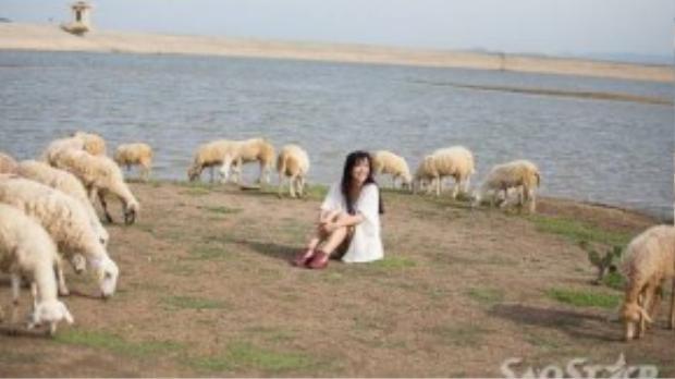 Du khách tha hồ tạo dáng chụp ảnh với đàn cừu hết sức thân thiện này.