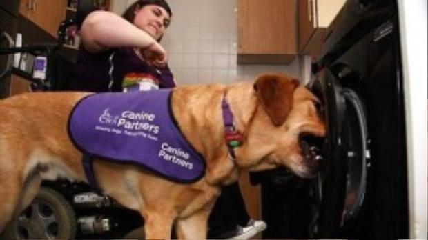 Clare bị mắc hội chứng thoái hóa khớp nên chỉ cần cử động một chút là cô cũng bị đau nhức xương khớp. Vì vậy, Griffin chính là một thú cưng và cũng là bạn đồng hành đáng tin cậy trong cuộc sống của cô.
