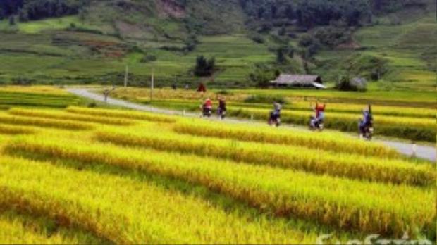 Dọc theo thung lũng suối Mường Hoa là các bản Tả Van, Lao Chải, đây cũng là nơi tập trung những cánh đồng lúa lớn nhất, đẹp nhất và cao nhất.