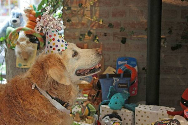 Sinh nhật hoàng tráng của chú chó cứu hộ 11/9 cuối cùng còn sống