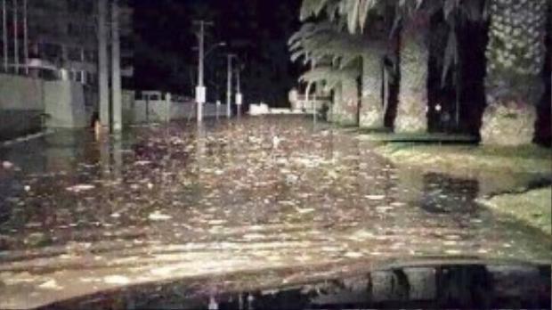Trong khi đó, mực nước dâng cao ở thành phố Coquimo. Toàn bộ vùng biển Chile được đặt trong tình trạng báo động đỏ. Reuters cho biết, một số vùng bờ biển của bang California, Mỹ, đến bờ biển quốc gia châu Đại Dương New Zealand cũng đã phát cảnh báo sóng thần.
