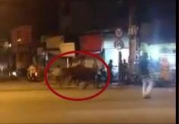 Một người chậm chân bị chú bò húc trúng. (Ảnh chụp từ clip)