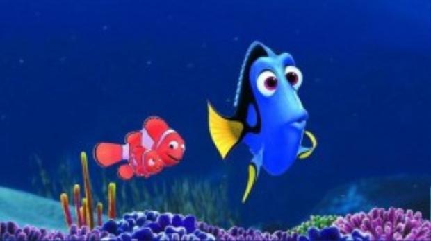 So với một chú cá hề nhỏ bé và hiếu động, có lẽ chuyện về cô cá đãng trí này cũng có nhiều thứ để nói.