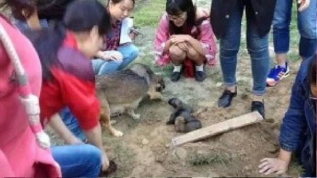 Sinh viên giải cứu đàn chó con bị bảo vệ trường chôn sống.