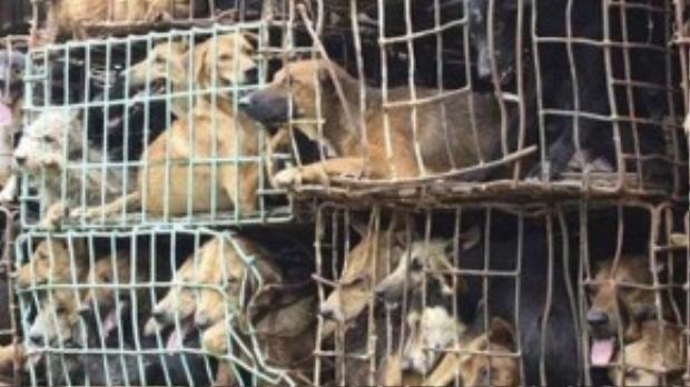 Mỗi năm tại Việt Nam có đến 5 triệu chú chó bị sát hại để làm thức ăn, mồi nhậu. Ảnh minh họa.