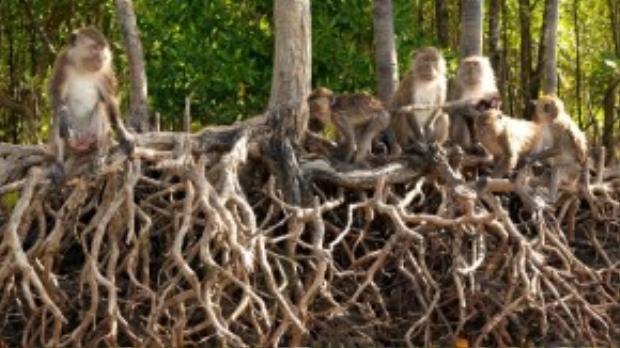 Koh Lanta nằm ngoài khơi phía tây nam Thái Lan, cách xa Koh Phi Phi ồn ào. Đây là nơi tận hưởng không khí mát mẻ và sự yên tĩnh bởi sự tách biệt đám đông. Nhớ khám phá hết các đảo với bờ biển vắng, khu rừng nhiệt đới, rừng ngập mặn, thác nước trên mũi phía nam trước khi bạn kết thúc hành trình.