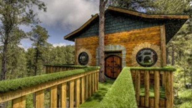 Căn nhà có diện tích 37 m2, được xây dựng giữa 2 cây thông cao chót vót.