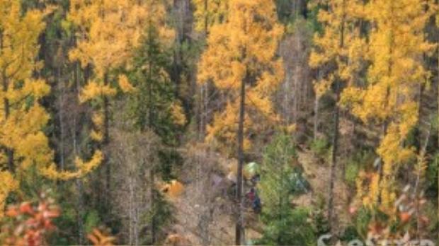 Cắm trại tại rừng Taiga quãng thời gian mùa thu này chắc hẳn sẽ để lại những kỷ niệm vô cùng đáng nhớ.