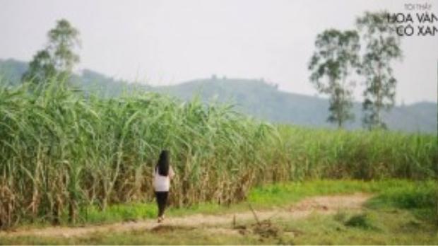Tôi thấy hoa vàng trên cỏ xanh liệu có giúp Victor Vũ đạt được tổng doanh thu trên 300 tỷ?